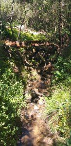 Babylonstoren stream