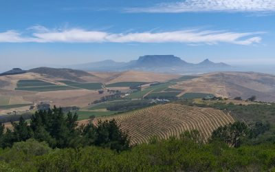 The Valley Wine Experience